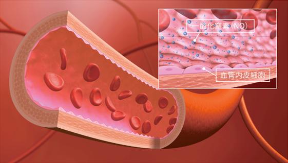 血管 イメージ