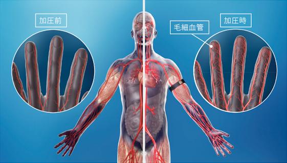 血管の拡張・収縮 イメージ